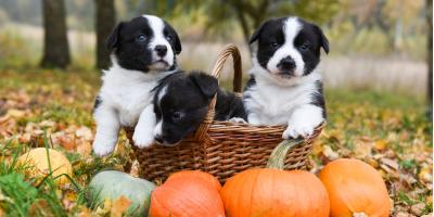 4 Halloween Pet Care Tips, ,