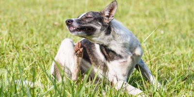 3 Common Skin Conditions in Dogs, Lillian, Alabama