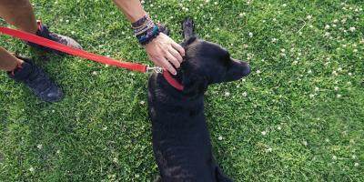 3 Ways to Keep Pets Healthy in Summer Heat, Lillian, Alabama