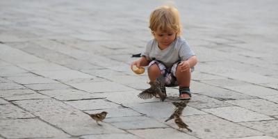 3 Common Myths About Birds Dispelled, Lincoln, Nebraska