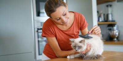 3 Cat Grooming Tips for Keeping Your Furry Feline Happy & Healthy, Lincoln, Nebraska