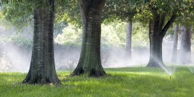 The Benefits of Adding Trees to Your Yard, Lincoln, Nebraska