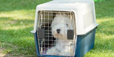 3 Tips for Moving With Pets, Lincoln, Nebraska