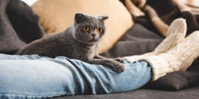 3 Ways to Stop Cats From Scratching Carpet, Lincoln, Nebraska