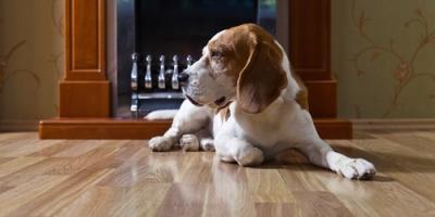 3 Benefits of Hardwood Floor Sanding, Lincoln, Nebraska