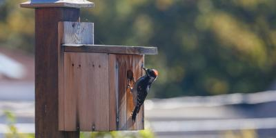 5 Tips for Attracting Woodpeckers to Your Bird Feeder, Lincoln, Nebraska