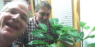 What Are the Coffee Bean Plants Outside Lion Coffee?, Honolulu, Hawaii