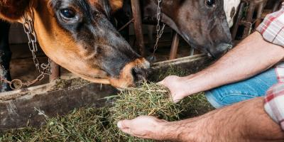3 Types of Livestock Feed, Whiteville, Arkansas