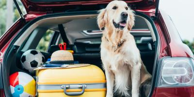 5 Tips for Long-Distance Moving With a Dog, Cincinnati, Ohio