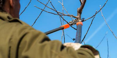 4 Reasons to Schedule Professional Tree Pruning Services, Macedon, New York