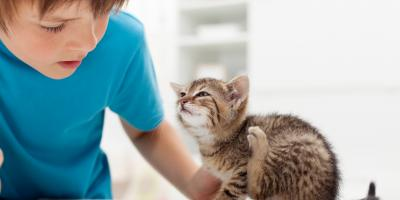 4 Facts About Fleas Every Pet Owner Should Know, Maineville, Ohio