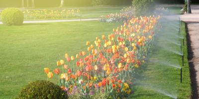 How to Care for Your Garden While You're Traveling, Texarkana, Texas