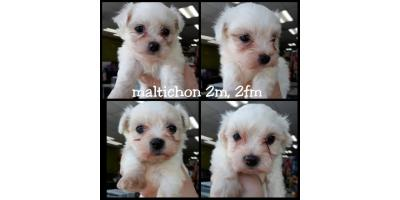 Vet checked and guaranteed puppies from The Pet Hale!, Ewa, Hawaii