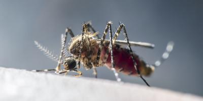 Pest Control Experts Discuss 4 Insects That Bite, Manchester, Connecticut