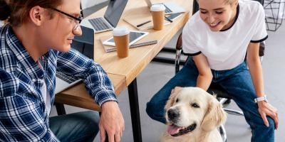 How to Keep a Pet-Friendly Office Clean, Omaha, Nebraska
