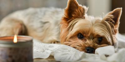 4 Ways to Prevent Pet-Related Fires , Shenandoah, West Virginia
