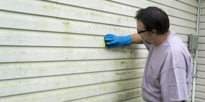 A Guide to Different Types of Mold, 2, Maryland
