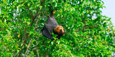 3 Common Bat Myths Debunked, Miami, Ohio