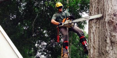 How to Identify a Dangerous Tree: Advice From Cornelia's Top Arborist, Baldwin, Georgia