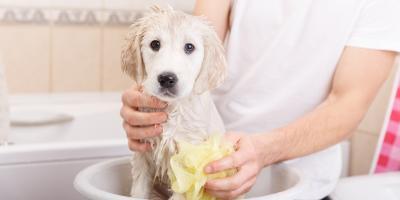 5 Reasons Why Dog Bathing Is Essential, McKinney, Texas