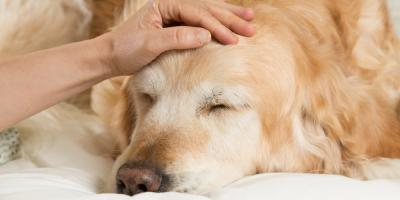 How Can Medical Marijuana Help Dogs?, Fairplay, Colorado