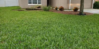 How to Help Your Lawn Survive the Chill, Jasmine Estates, Florida