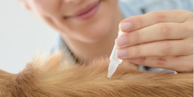 Local Veterinarian Shares 3 Types of Flea & Tick Prevention , Garrettsville, Ohio
