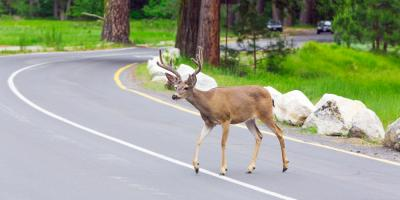 3 Tips For Driving During Deer Season, Wallkill, New York