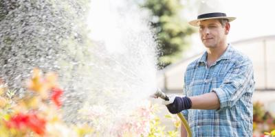 When is the Best Time to Water Plants? , Cincinnati, Ohio