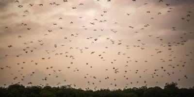 What Do Bats Do in Spring?, Miami, Ohio