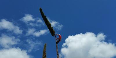 3 Signs Your Tree May Fall, Ewa, Hawaii
