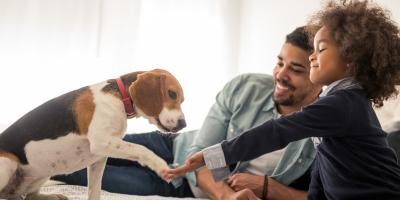 How Your Pet Can Affect Your Home's HVAC System, Crystal, Minnesota