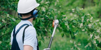 3 Advantages of Regular Tree Trimming, Marshan, Minnesota
