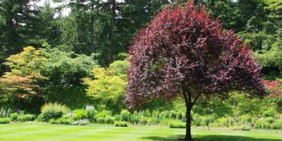 Why You Should Hire a Tree Service Company , Marshan, Minnesota