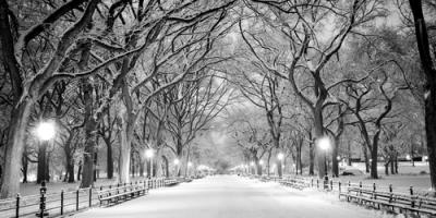 How to Care for Your Trees in Winter, Center City, Minnesota