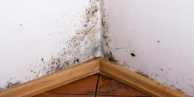 Why You Should Immediately Treat Mold & Mildew Growing in Your Home, Shenandoah, West Virginia