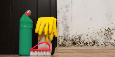 Do You Need Mold Remediation? 5 Common Questions Answered, Calhoun, Georgia