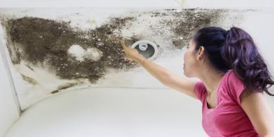 3 Benefits of Professional Mold Remediation, North River, Virginia