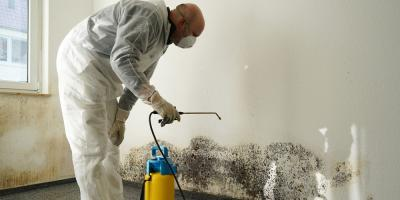 4 Informative FAQs on Mold Remediation, Dennis, New Jersey