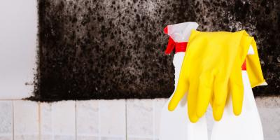 Mold: What to Ask Before Hiring a Mold Removal Company, Jeffersonville, Indiana
