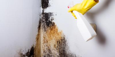 3 Reasons to Leave Mold Removal to a Professional , Pagosa Springs, Colorado