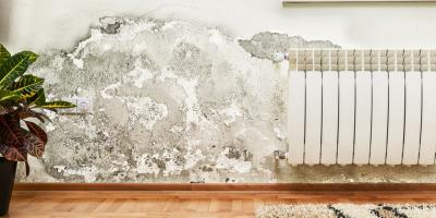 3 Indications You Need the Assistance of a Mold Removal Service , ,