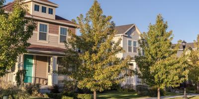 3 Common Summer Tree Care Problems, Macedon, New York