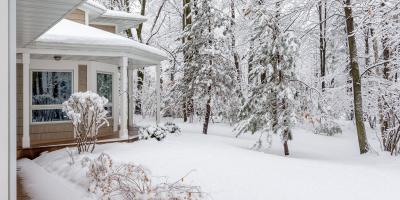 3 Common Types of Winter Tree Damage, Macedon, New York
