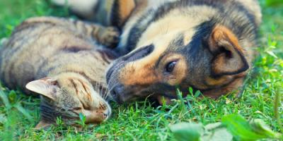 3 Tips for Caring for Animals With Thyroid Troubles, Sycamore, Ohio