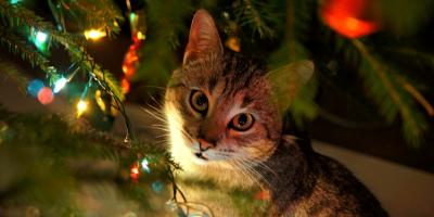 How to Cat-Proof the Christmas Tree, Sycamore, Ohio