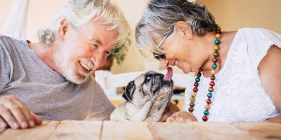 3 Tips for Taking Care of a Senior Dog, Montgomery, New York