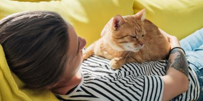 4 Signs Your Cat May Need Veterinary Care, ,