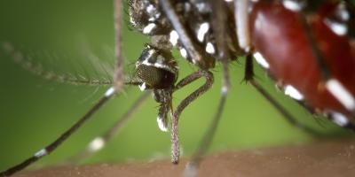 The Dangers of Mosquito & Tick Infestations, Rochester, New York