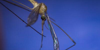 Prevent Illness This Summer With Mosquito Treatment, Murrayville, Georgia
